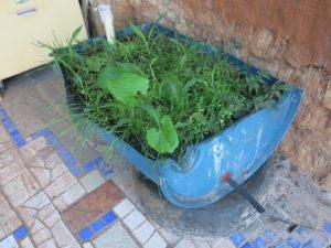 Canteiro subirrigado já plantado