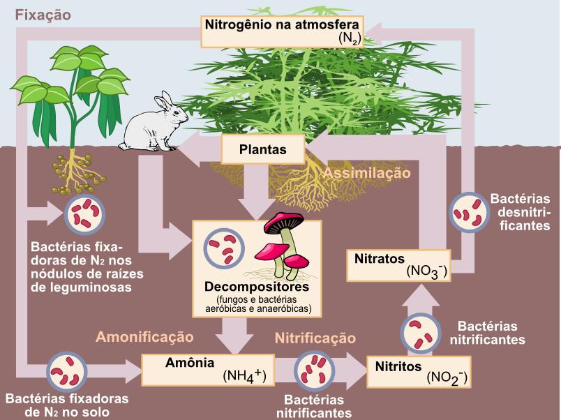 Urina como fonte de nitrogênio. Fechamentod e ciclos.