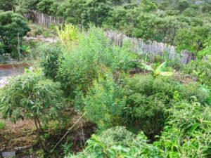 Agricultura regenerativa em neossolo quartzarenico