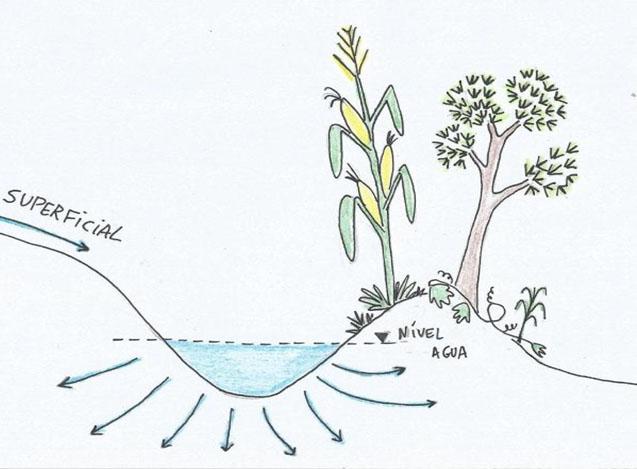 Plante água: aprenda uma das técnicas mais simples da permacultura
