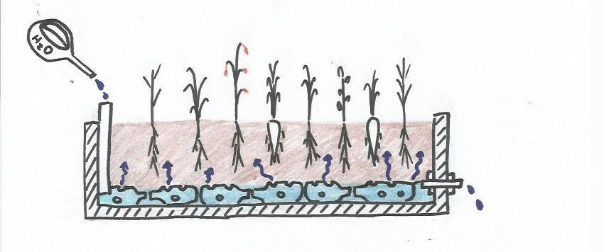 Não regue suas plantas: a tecnologia da autoirrigação